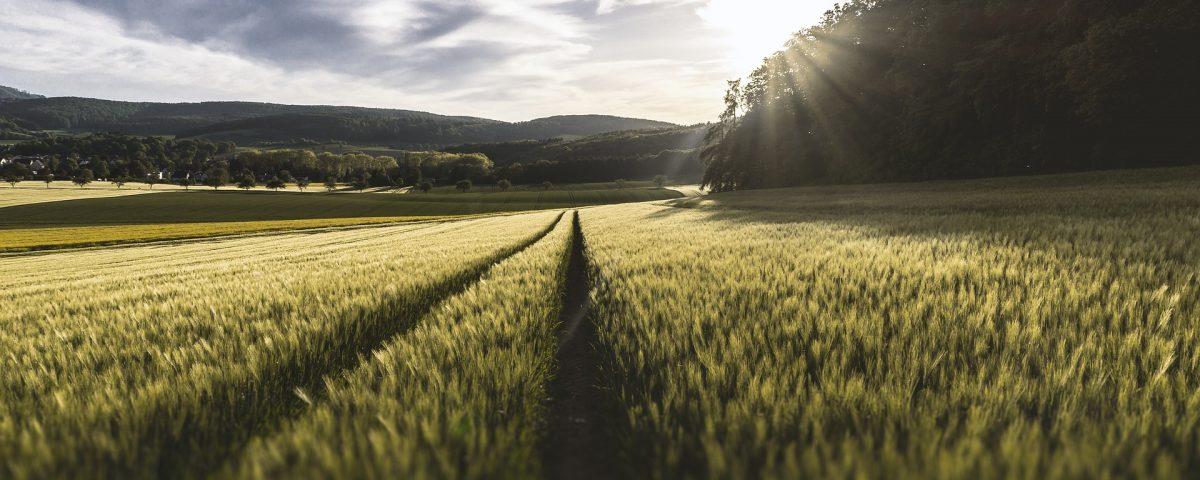 Земеделие на научните проучвания