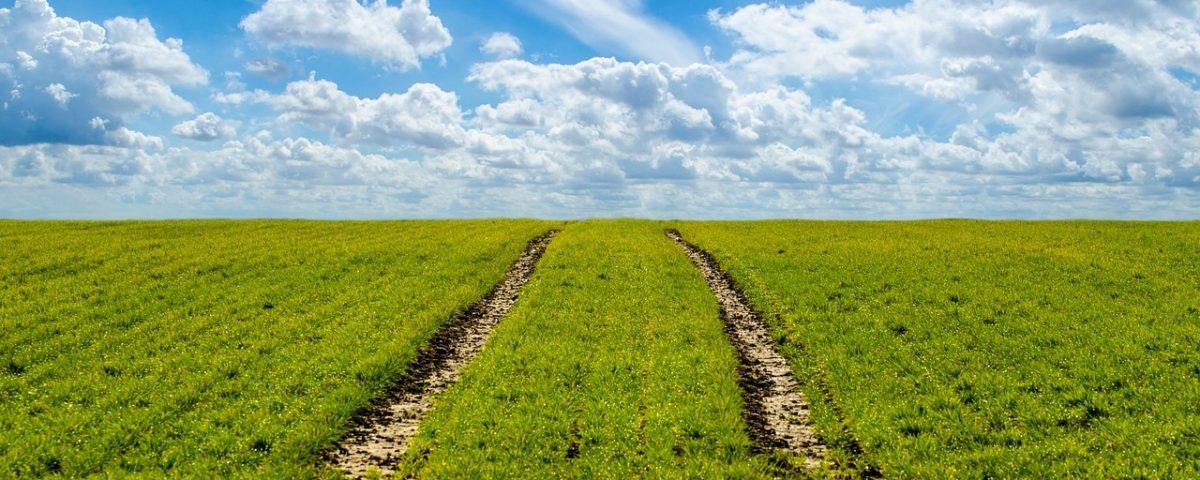 биологичното производство в ЕС