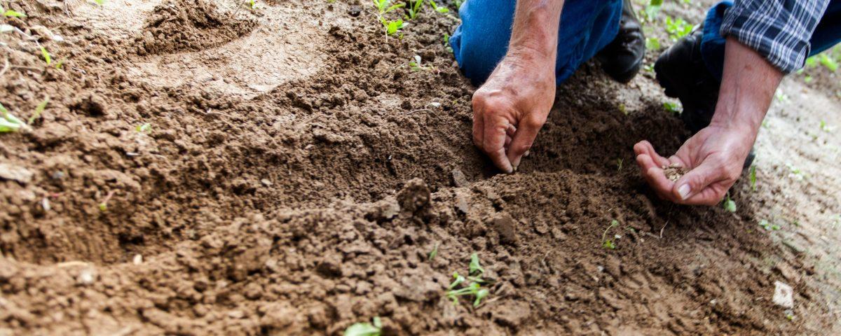 Почви
